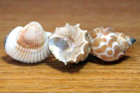 Shell Hair Barrette